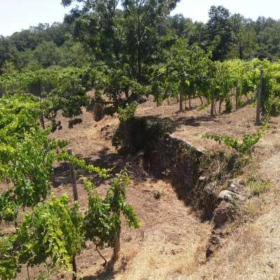 The ancient stone walls of Etna vineyards